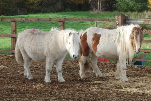 Blue Cross appeals for horse toys for rescued Bodmin ponies | The ...