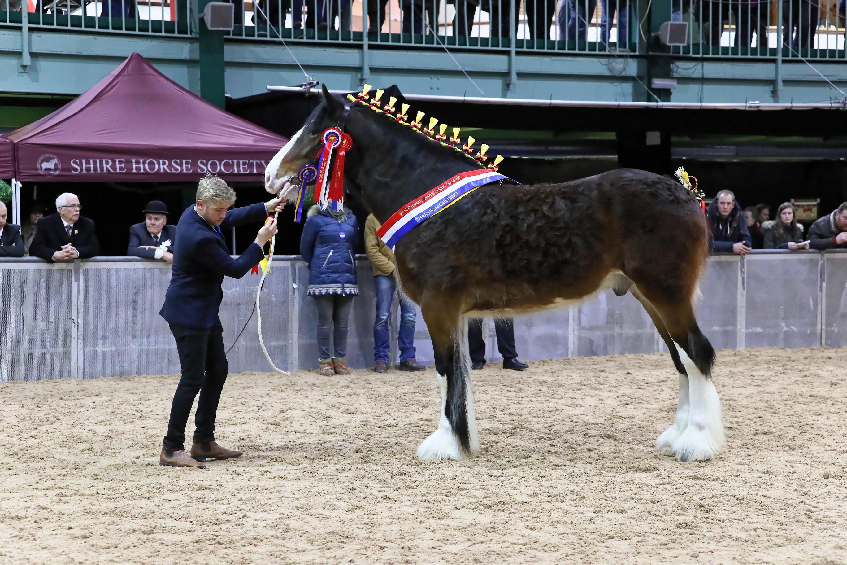 Ingressos disponíveis para o maior encontro mundial de cavalos Shire 1