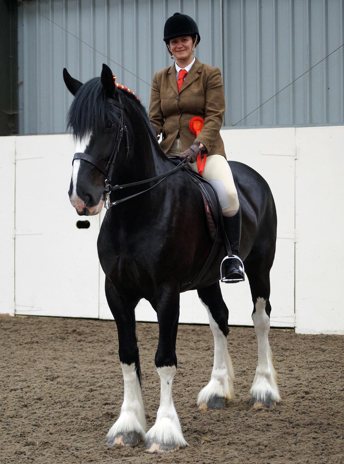 Heavy Horse Ridden - Nicola Dewsnip and Hightown Cassie