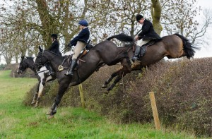 Jumping the drop hedge at Ladywood - The Cottesmore Hunt at Ranksboro, 26-11-13.