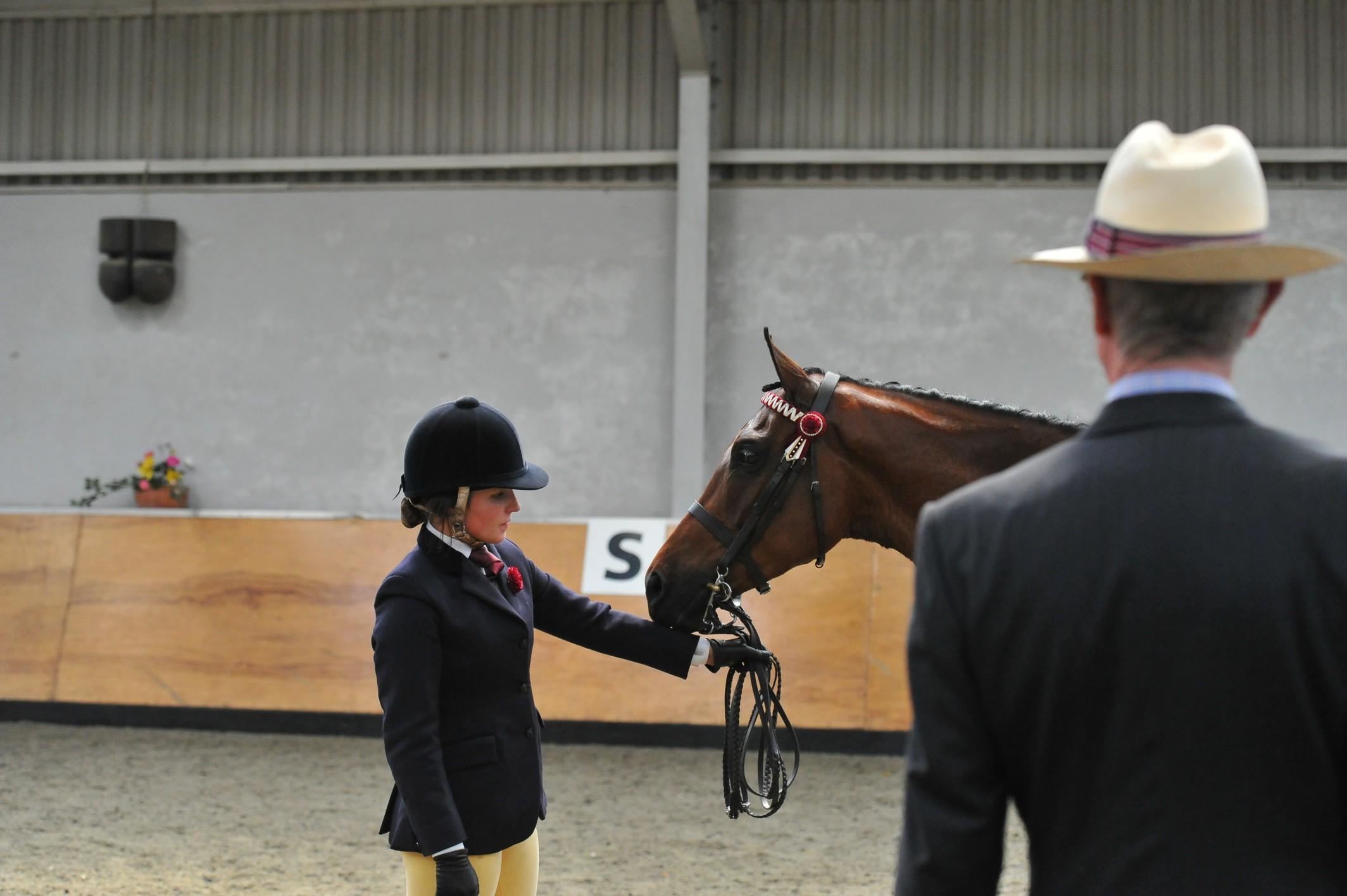 SEIB busca por uma Star Master Class no Your Horse Live 1
