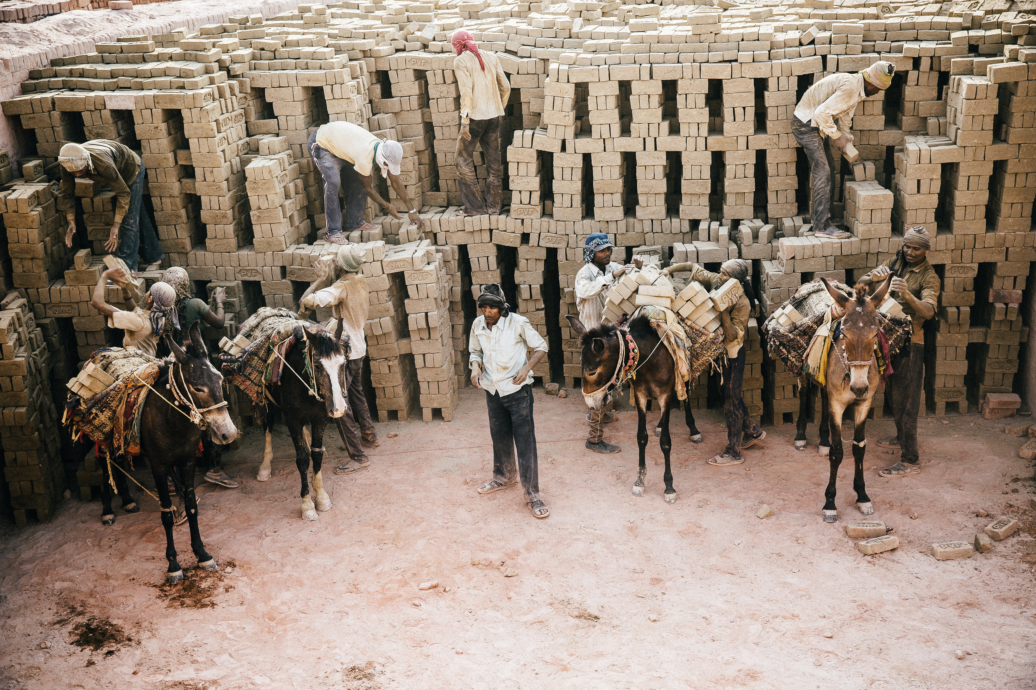 Donkeys Loaded With Bricks India