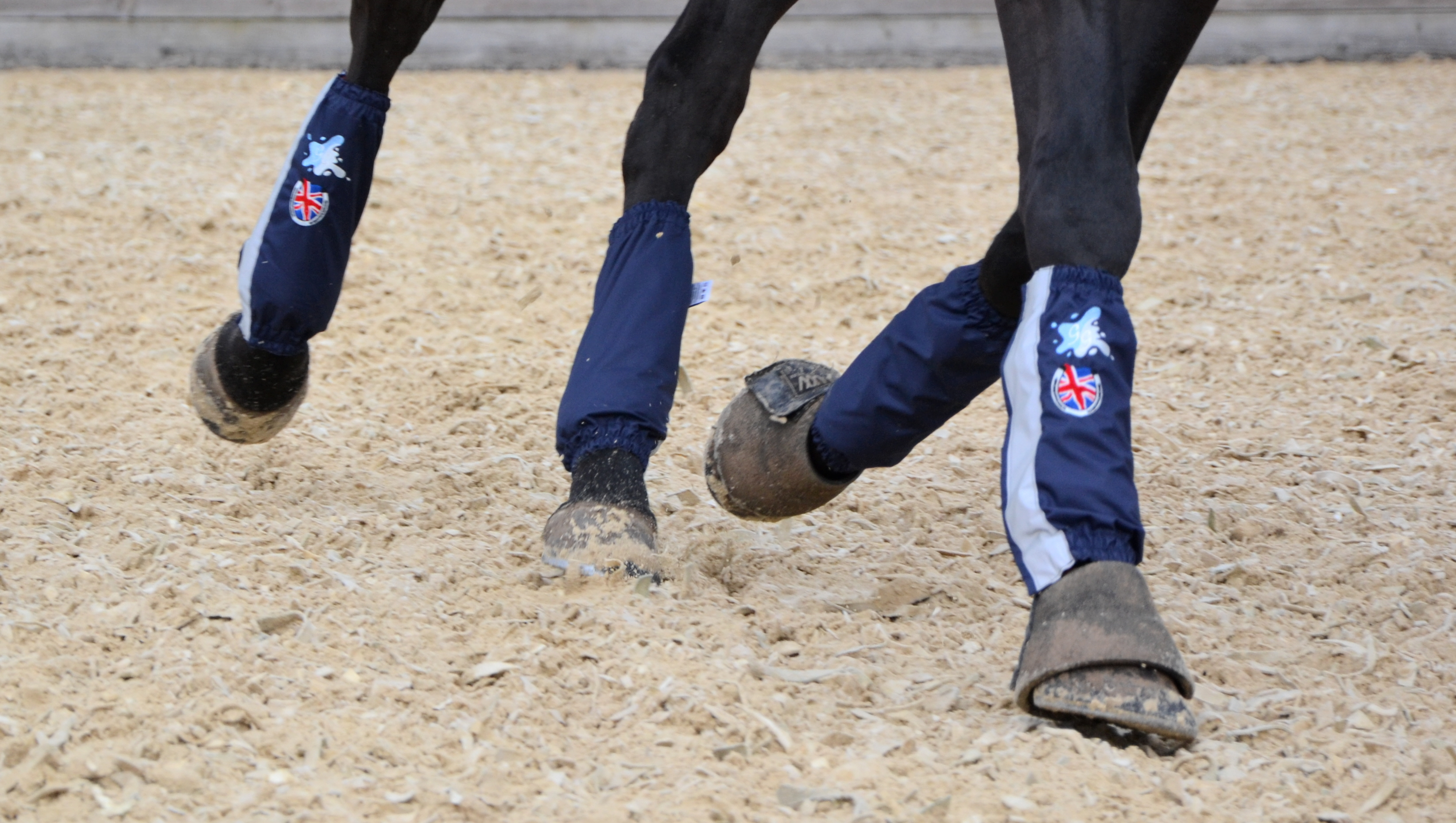 Golly Galoshes Patriotic Gaiters. Photo by Thoroughbred Sports Photography
