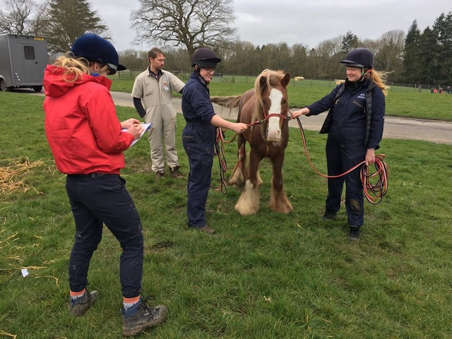 125 voluntários veterinários BEVA Trust ajudam mais de 1000 cavalos no Reino Unido 3
