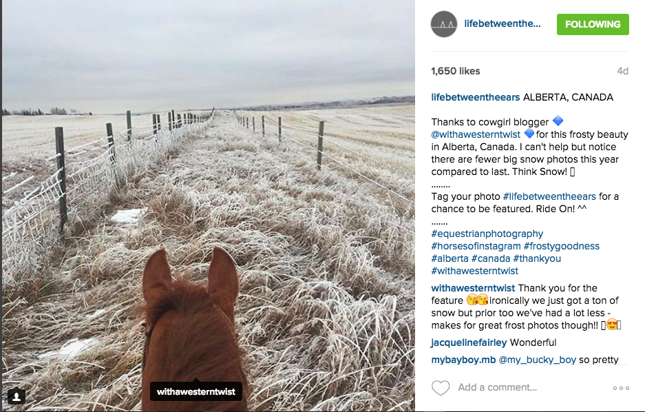 18 Equestrian Instagram accounts you need in your life | The