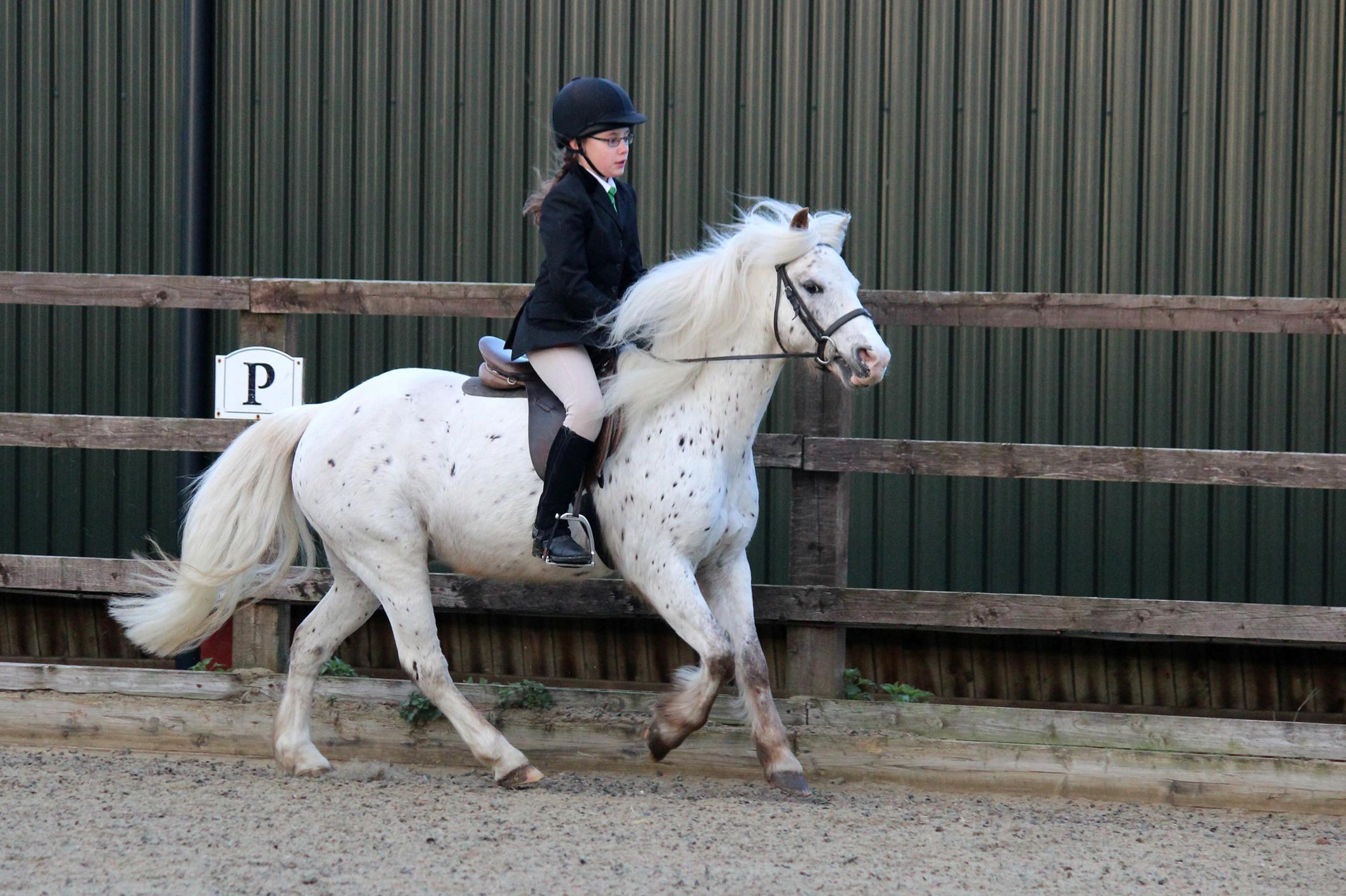 10 coisas fantásticas sobre escolas de equitação |  Características 1