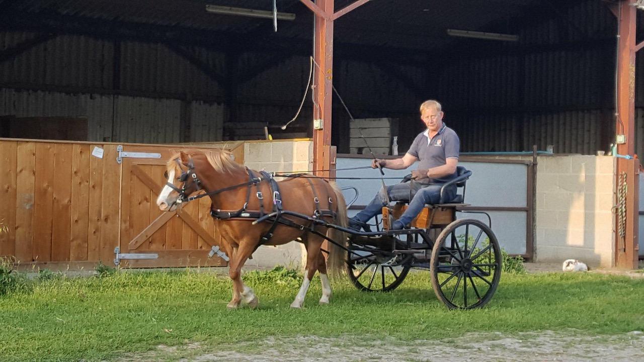Blue Cross ajuda a aliviar a crise dos cavalos com o serviço Home Direct 3