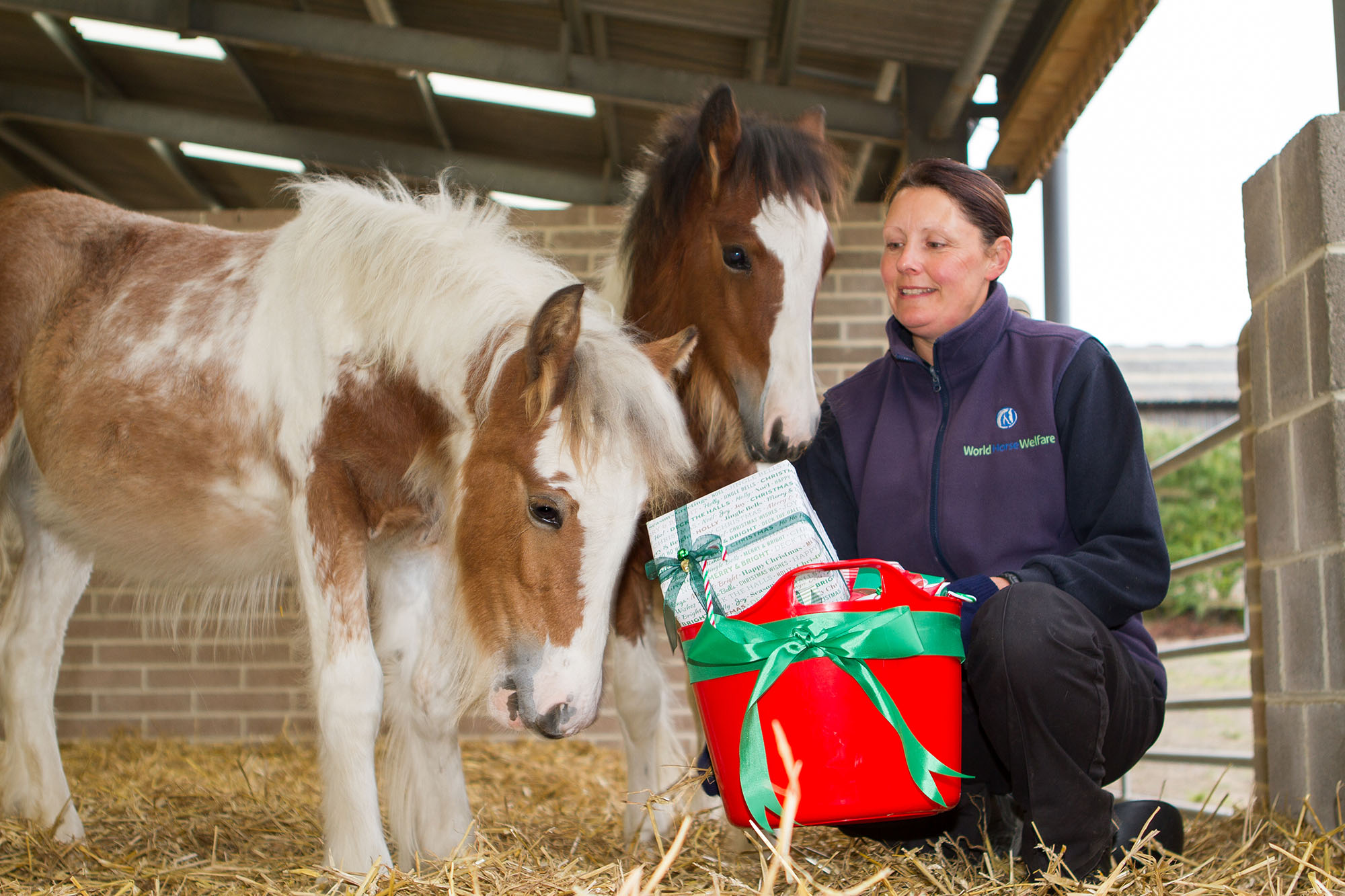 rosie-and-jim-receiving-christmas-gifts