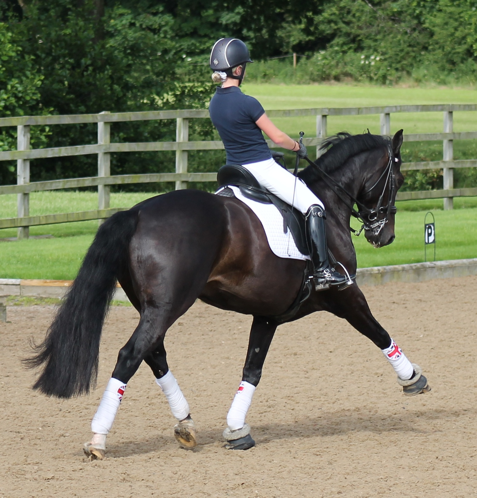 Sophie Quarterman - Dressage