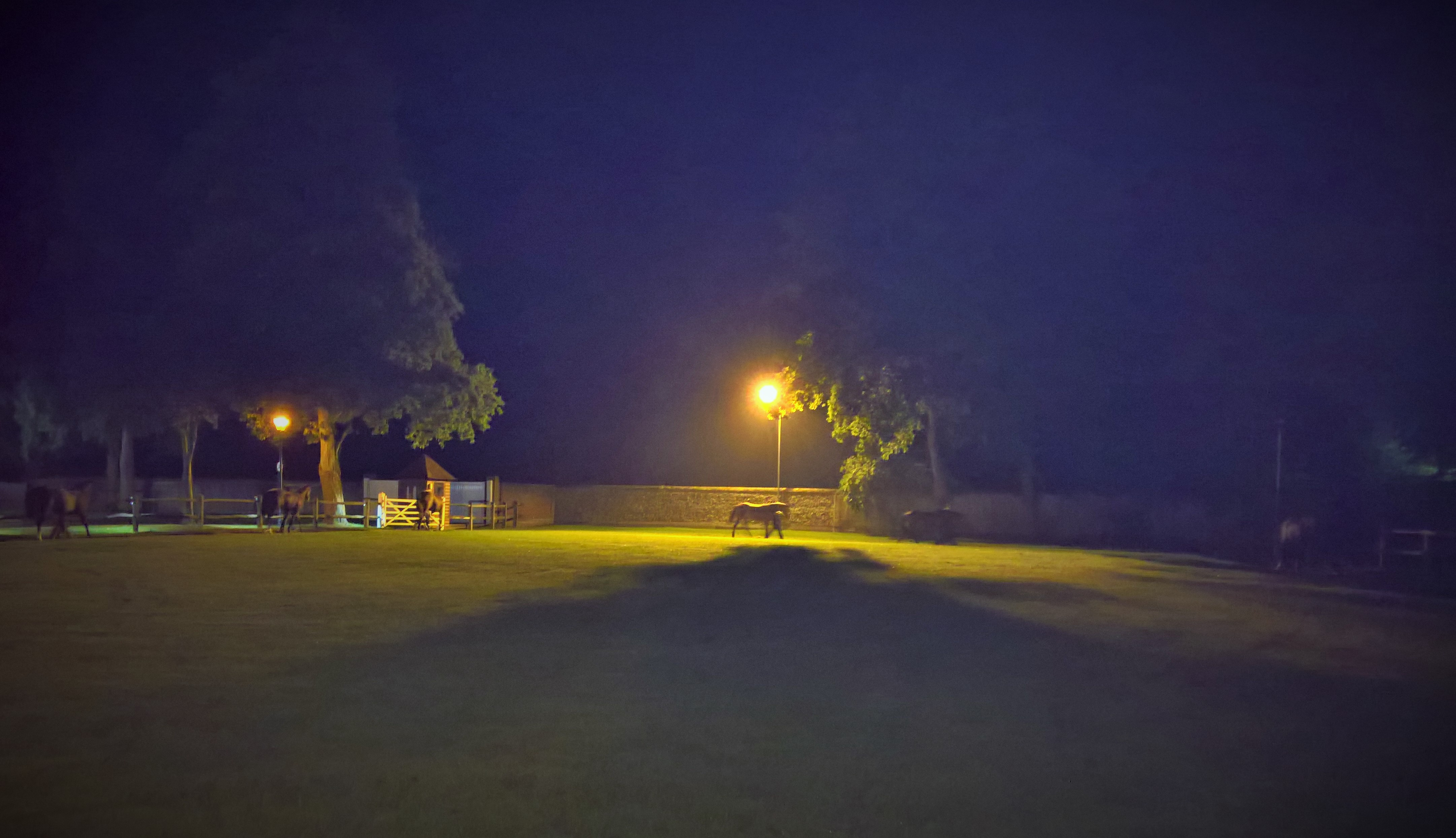 tattersalles-5am-hand-walking