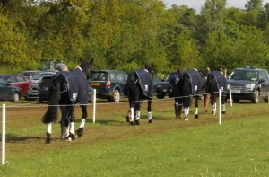 Dassett horses head to the trot up
