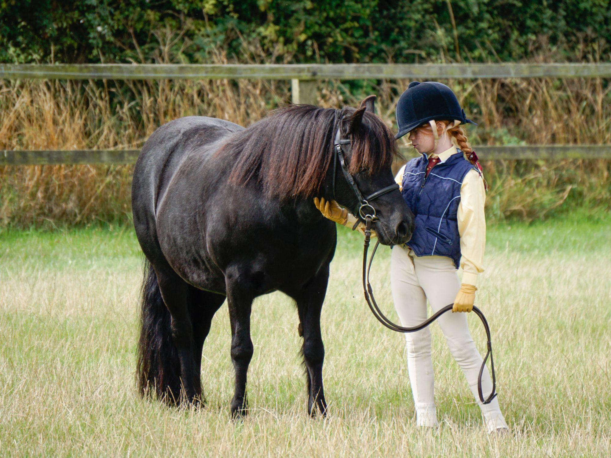 World Horse Welfare showing 1