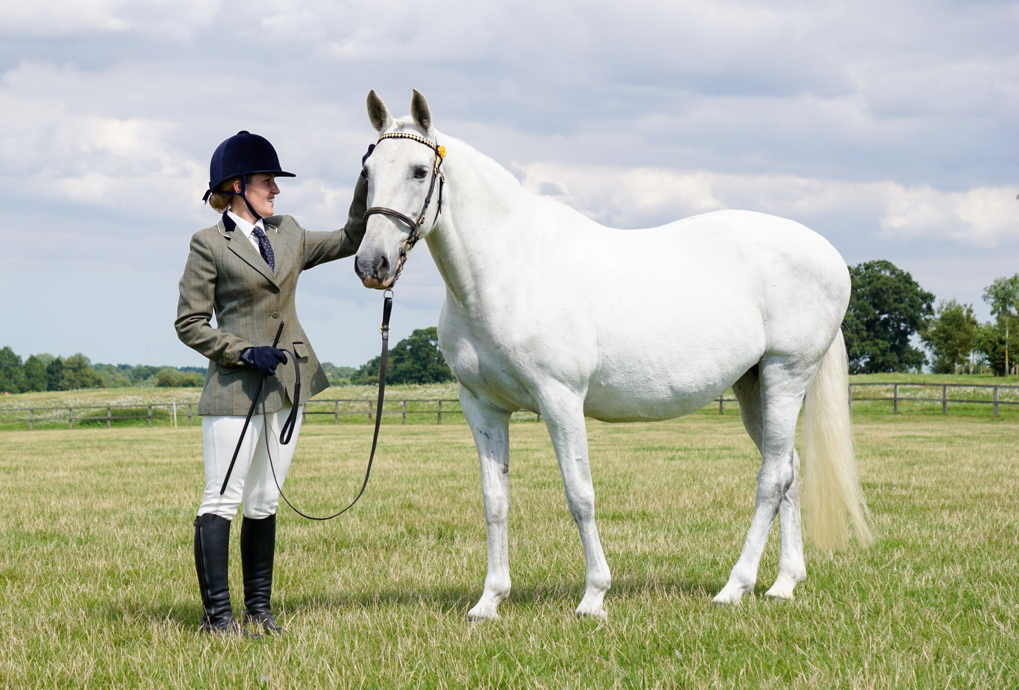 World Horse Welfare showing 2
