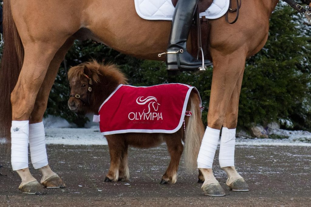 Os animais chegam dois a dois para Olympia | Notícia 3